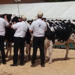 Dairy show Chabanais 2017